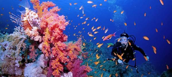 Pasión en coral