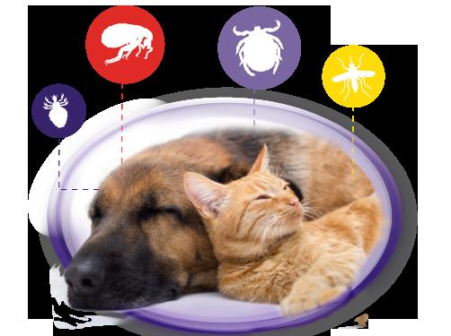 ¿ Como acabar con las garrapatas en perros y gatos durante los meses de primavera y verano ?